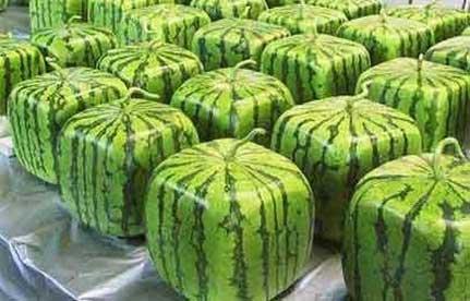 melancia Frutas e legumes em formatos inusitados
