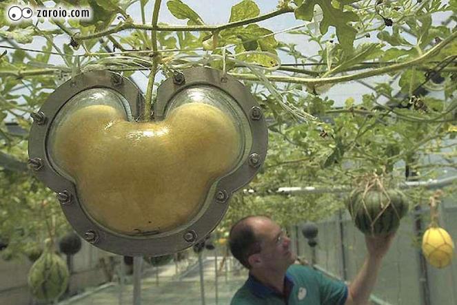 mikey Frutas e legumes em formatos inusitados