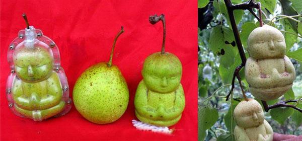 peras budas Frutas e legumes em formatos inusitados